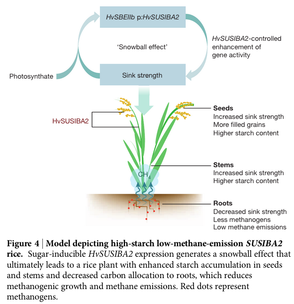methane model rice