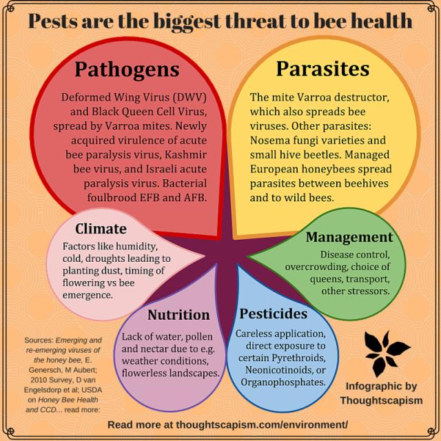Bee health viola