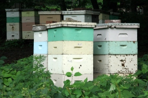 Beehives_in_Mankato,_Minnesota