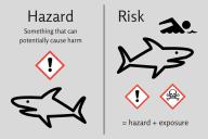 risk hazard sharks