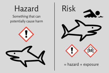 risk hazard sharks