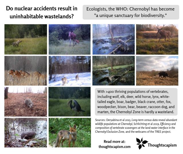 Chernobyl biodiversity